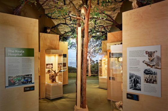 Koala Hospital | Exhibition design